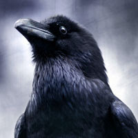 Corvus Avatar