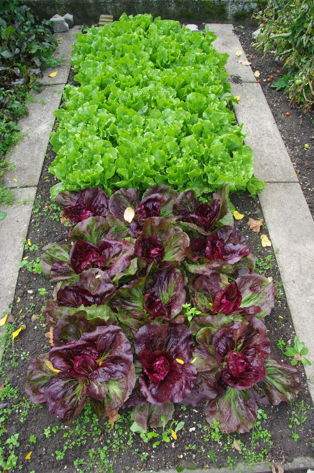 It's Spring! Time to plan a vegetable garden.