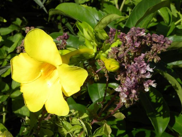 Flowers St. Kitts