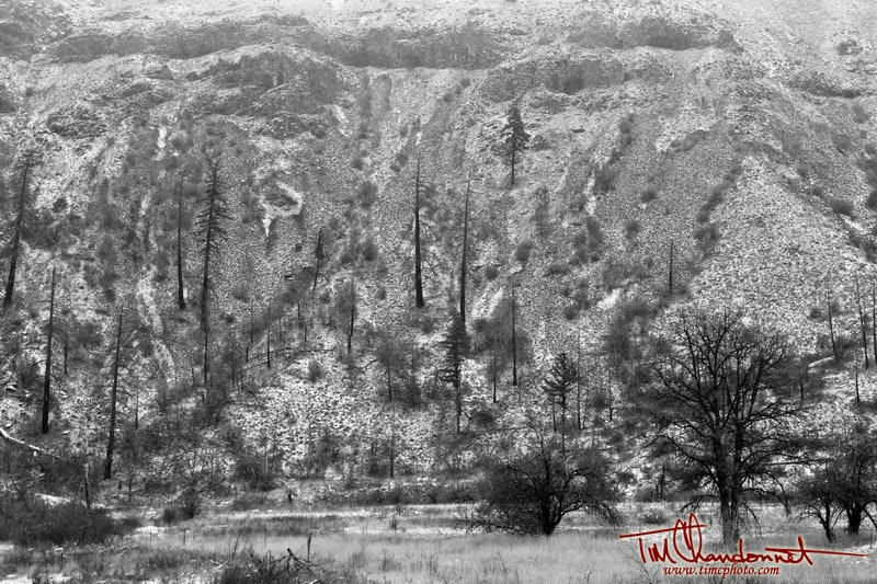 Tim Chandonnet Photography, Timcphoto, Tim C Photo, Central Washington, Eastern Washington, Pacific Northwest, Black and White, B&W, Landscape, nature, Landscape Photography, www.timcphoto.com, Snake Creek, North Cascade Mountains, Yakima mountain side, snow, winter, cold, burnt trees
