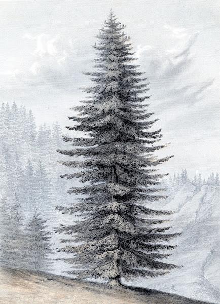 Vintage Christmas Tree Graphic