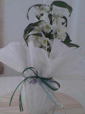 Orquídea Nobile