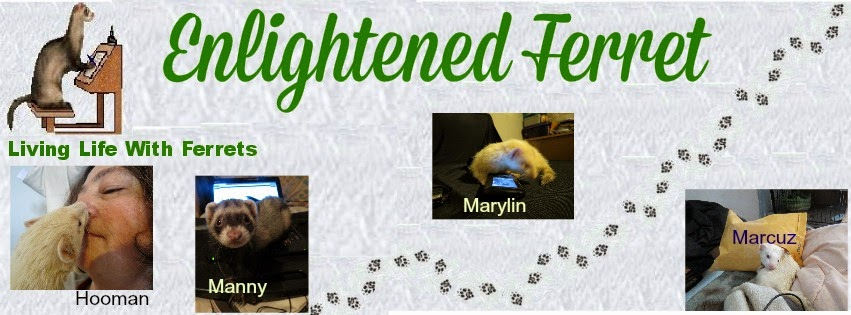 Enlightened Ferret
