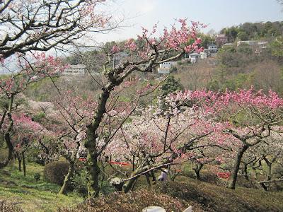 兵庫県・中山寺の梅林