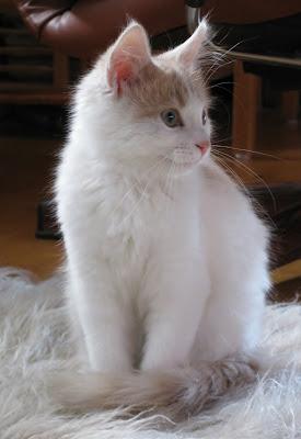 Felix 15 veckor