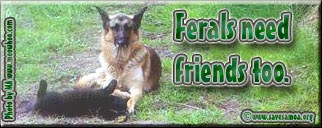 Stray Pet Advocacy