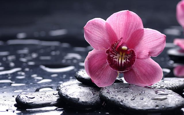 Flor Rosada Hermosas Fotos de Flores - Imágenes de Flores en HD