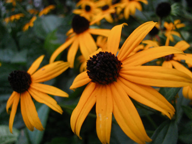 A-Mellow-Yellow-Monday-and-Hurricane-Irene-Summer-2011