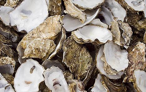 Bulk Oyster Shells i am Looking For Bulk Oyster
