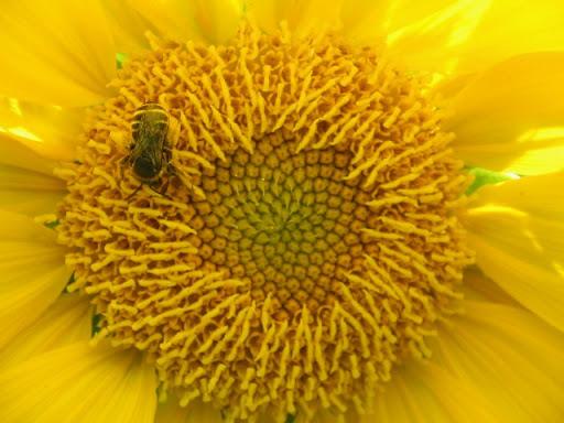 Sweetbee art