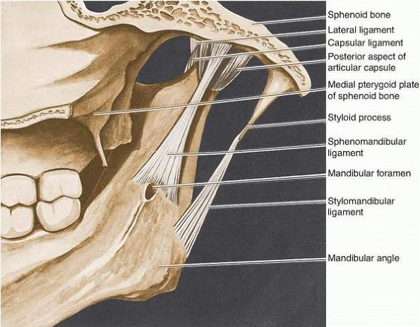dentistry lectures for mfds/mjdf/nbde/ore: anatomy of, Human Body