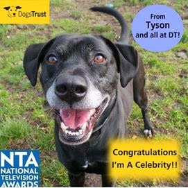 http://www.dogstrust.org.uk/rehoming/dog/1102452/tyson#.Ut_4N7TFIr3