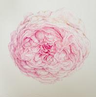 rose detail in watercolour