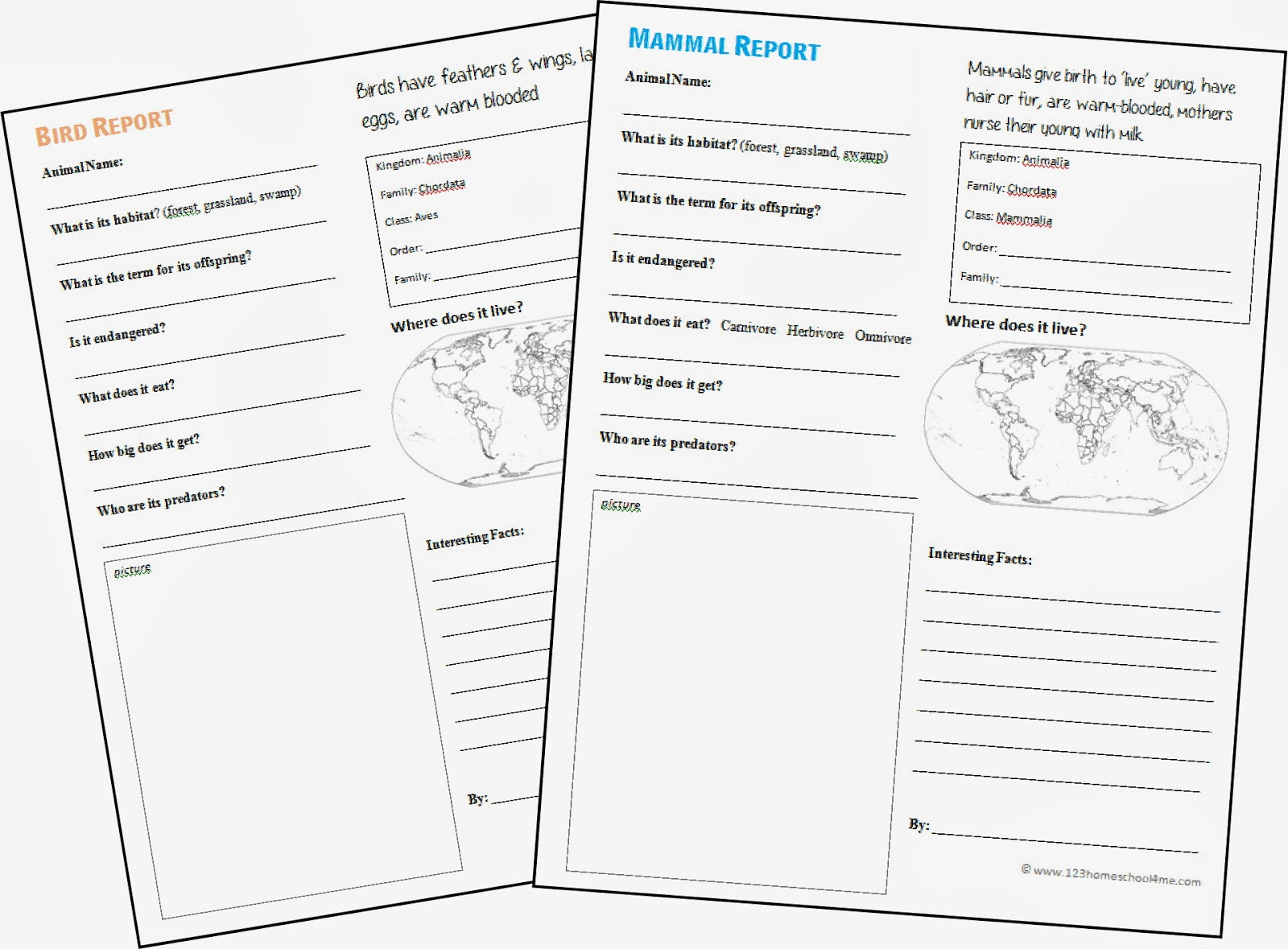 Worksheets 6th Grade Homeschool Worksheets animal report form printable 2nd grade 6th forms