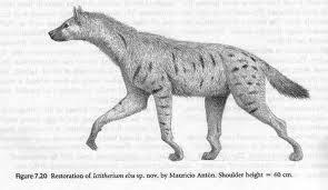 Ictitherium hyaneida fosil