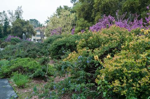 VIRTUAL ROAD TRIP~RANCHO SANTA ANA BOTANIC GARDEN, CLAREMONT, CALIFORNIA  This Wonderful Botanical Garden That We Will Visit Virtually Today Was  Originally ...