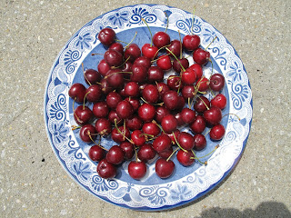 Cherries on blue and white plate