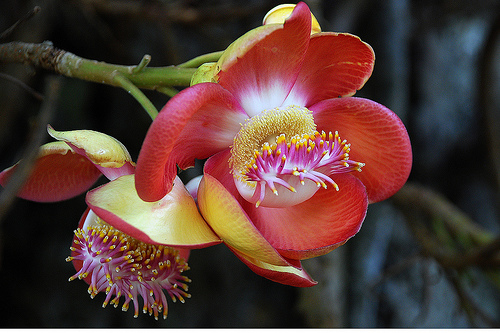 The 10 most beautiful flowers in the world the top ten list for What is the most beautiful flower on earth