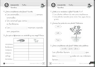 http://www.primerodecarlos.com/fichas_SM/evaluaciones_segundo_trimestre_1º/index.html