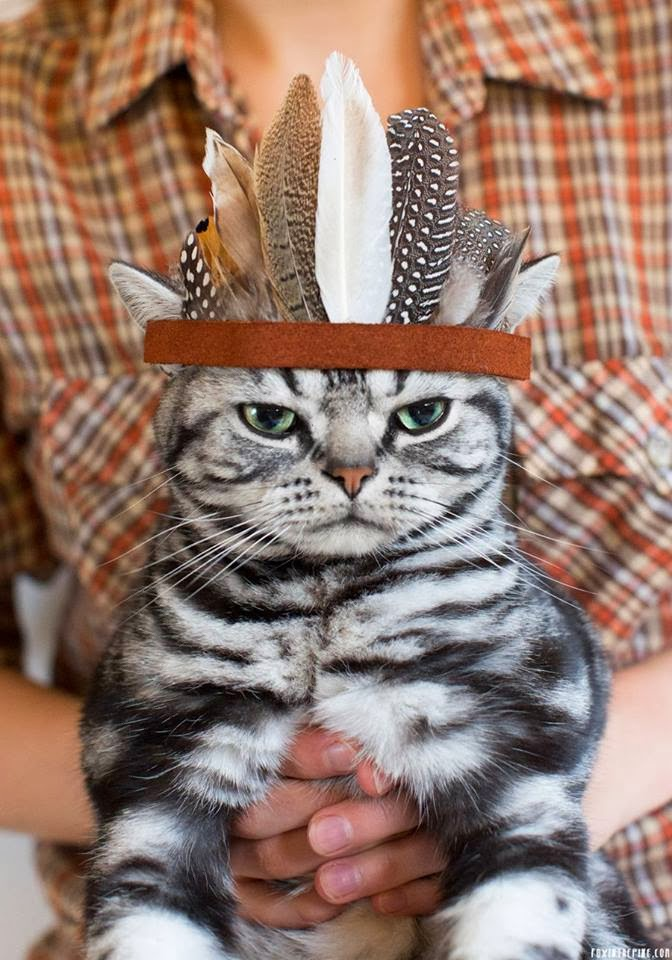 Funny cats - part 79 (35 pics + 10 gifs), cat wears feather hat