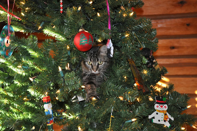 Charlie the kitten in the Christmas tree