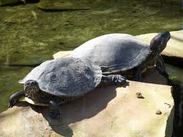 Zoo Animals - Turtle