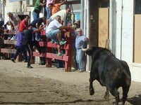 Vila Franca de Xira- Colete Encarnado e Feira Anual 2013
