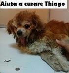 AIUTA A CURARE THIAGO.