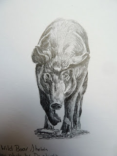 Sharon Whitley - The Rambling ArtistWild Boar Sketch