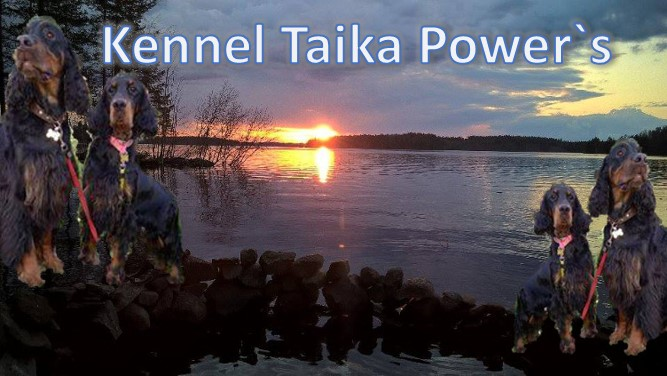 Kennel Taika Power's