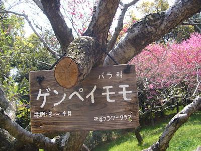花博記念公園鶴見緑地ウォーキング・ゲンペイモモ