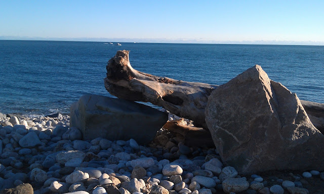 very old tree at Point Judith