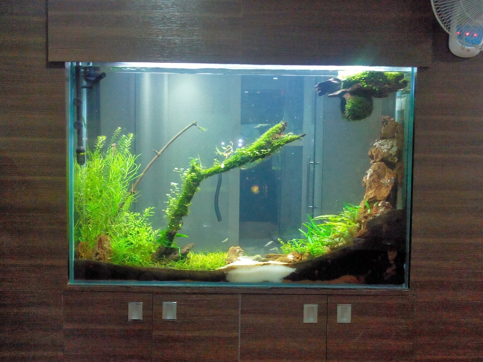 Fish aquarium price in bangalore - We Provide All Type Of Live Aquarium Plants Many More To Choose From