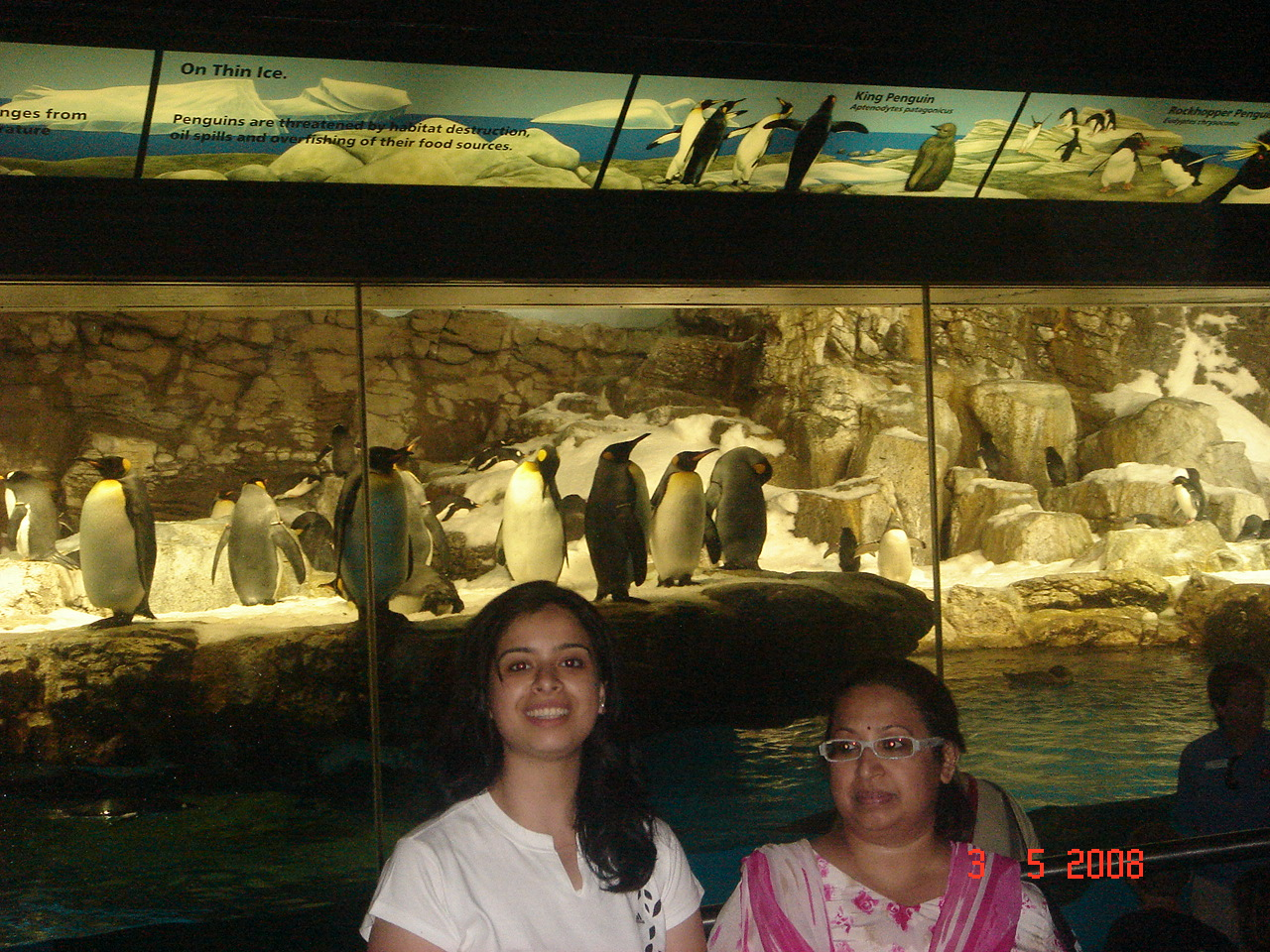 Penguins at Sea World in Orlando