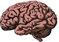 Tingkat Sistem Organ - Otak