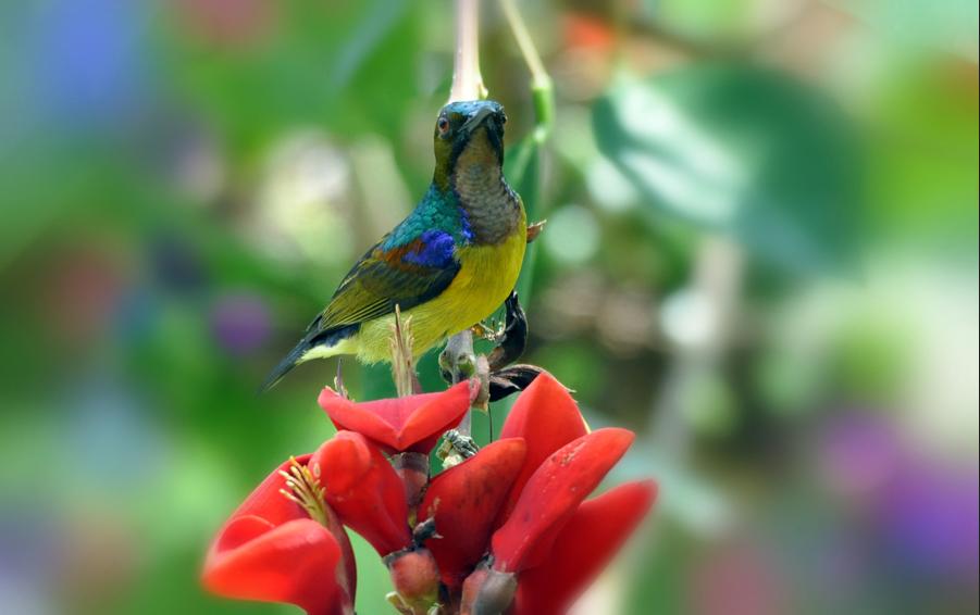 Imagenes De Flores Bonitas Gratis - Tipos de flores exoticas imagenes de amistad bonitas gratis