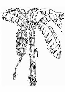 belajar hidup dari pohon pisang