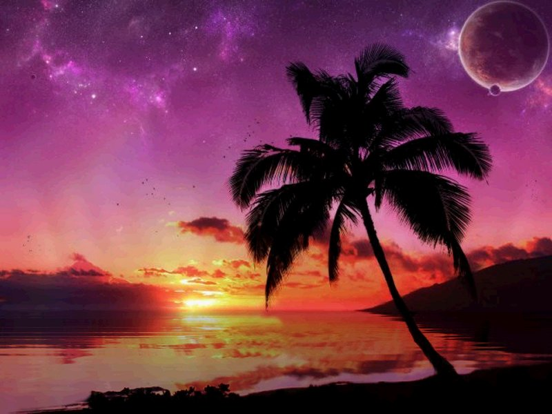 Tropical beaches at night |The Free Images