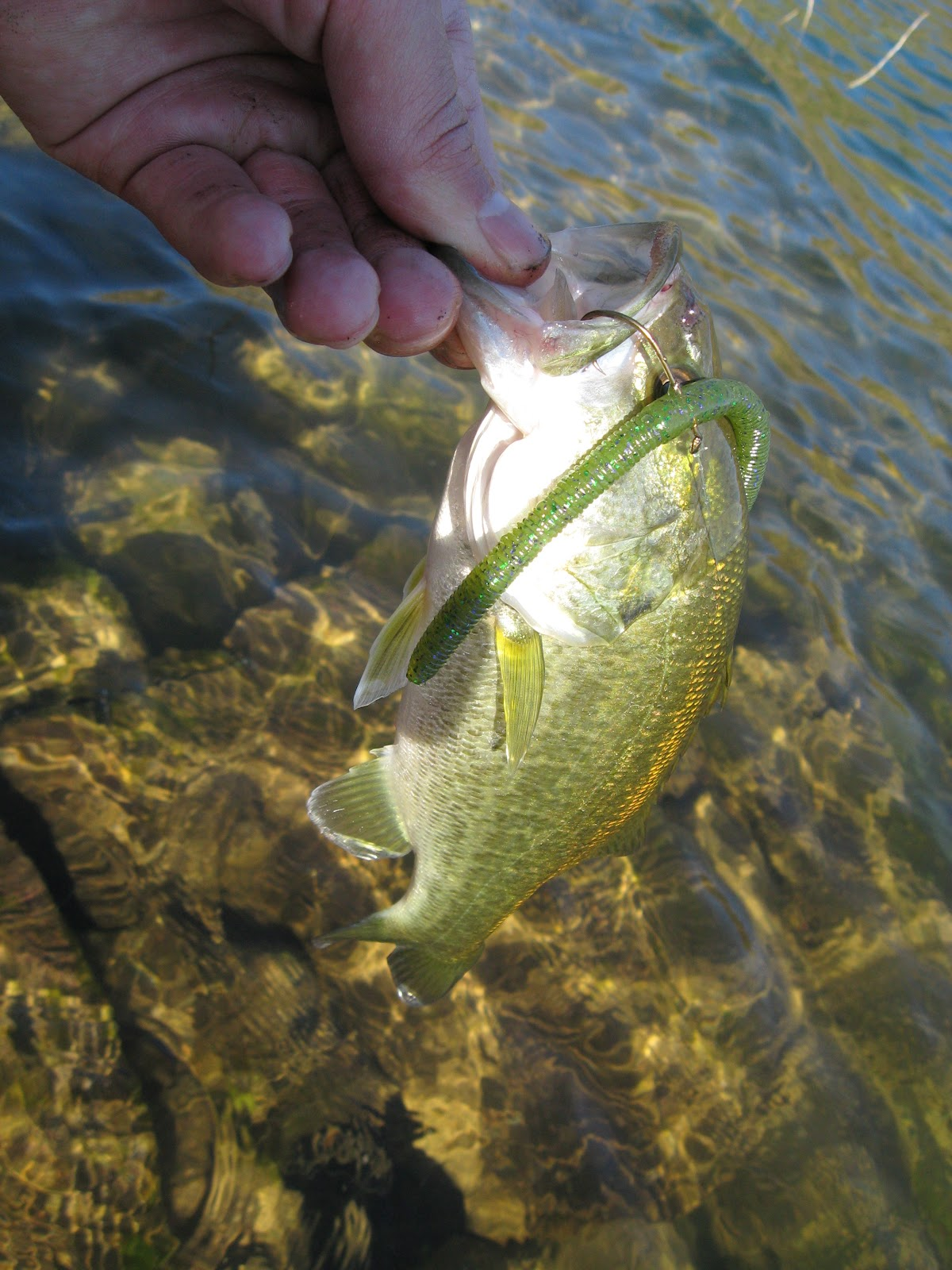 Diamond valley lake microbass hunting the river king for Diamond valley fishing report