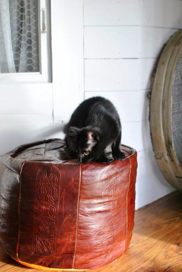 kattunge skinnpuff