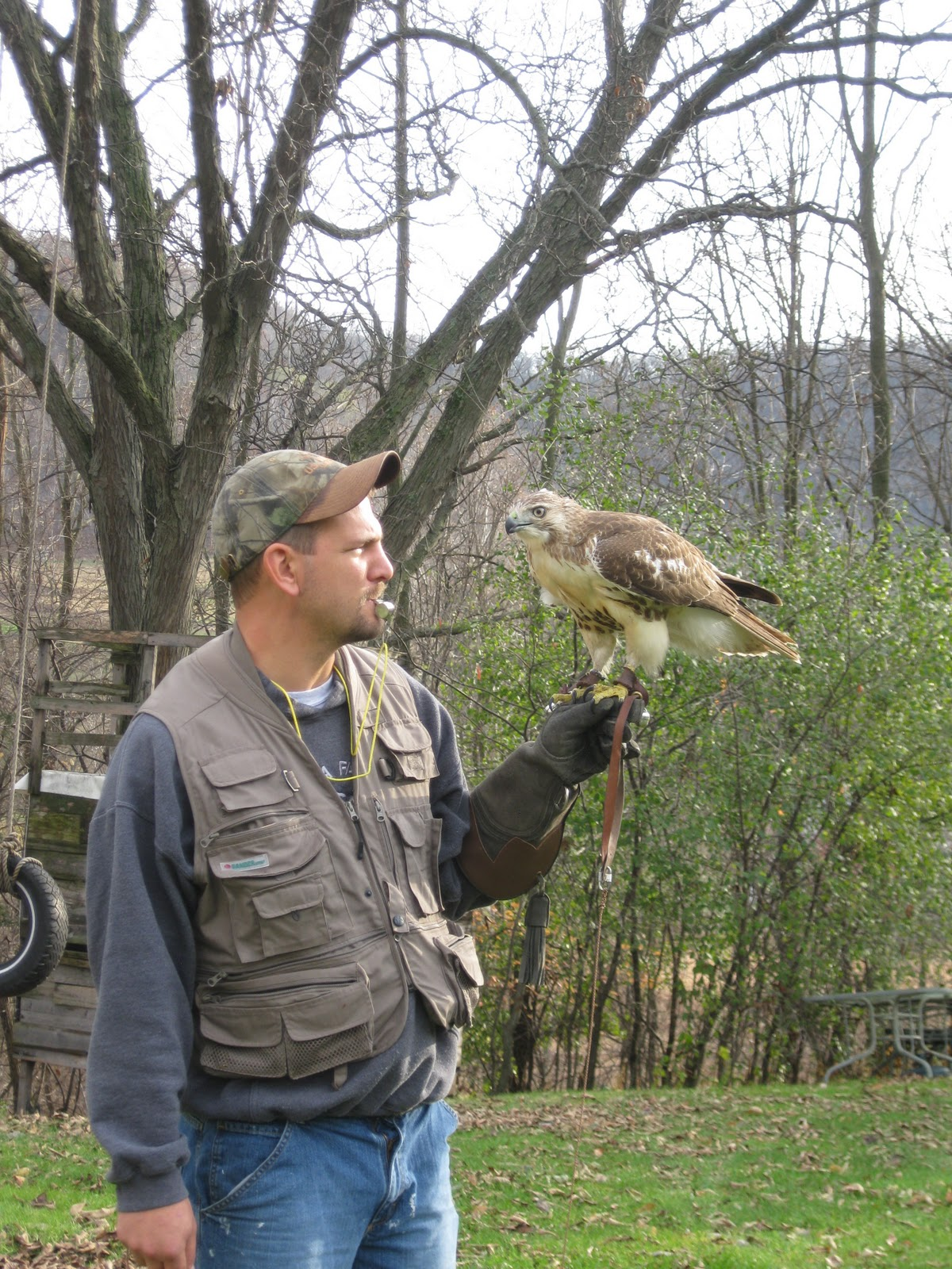 how to get into falconry in ontario