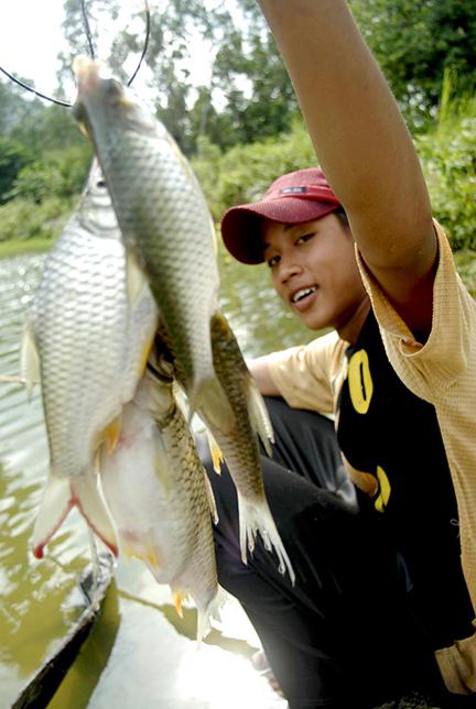 Kỹ thuật câu cá mè