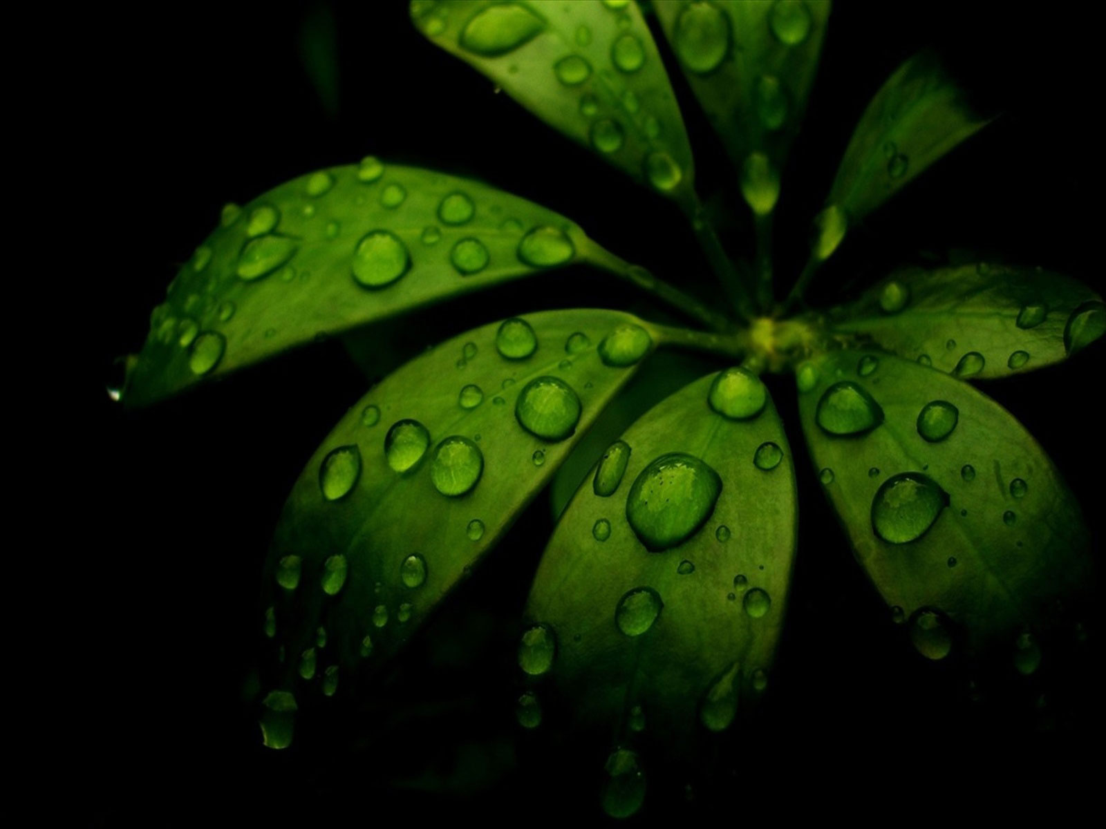 Drop Rain Forest Desktop Wallpaper