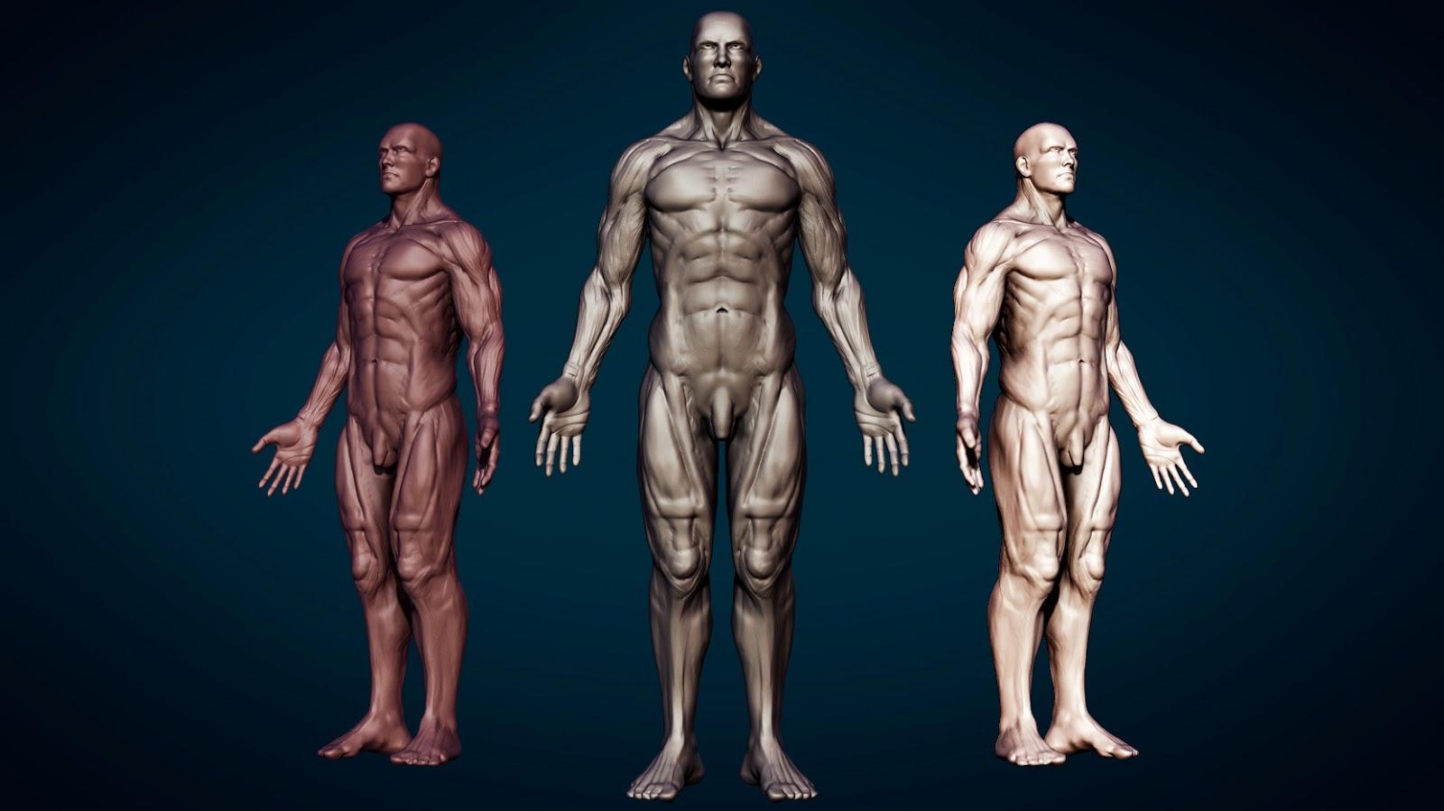 Hopens Blog Speed Sculpt Human Anatomy