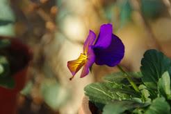 春の花から