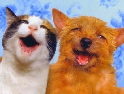 Placa bacteriana en Perro y Gatos