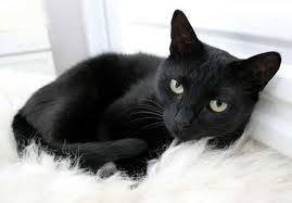 http://www.ciencia-online.net/2012/10/cuidado-gatos-pretos-os-amantes-de.html