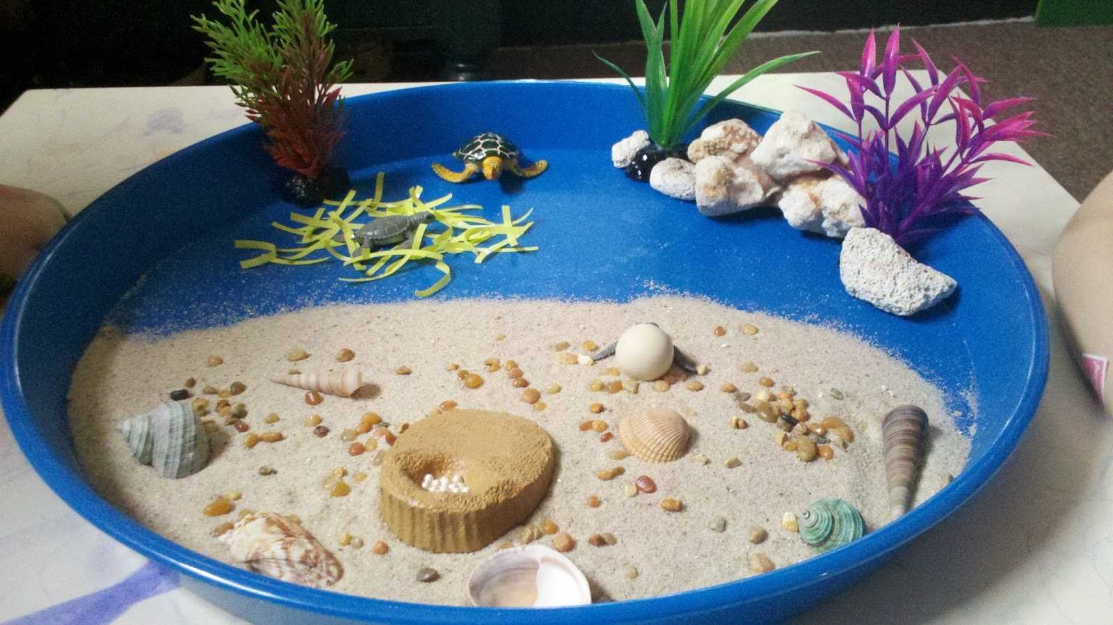 Munchkin and Bean: The Life Cycle of a Green Sea Turtle