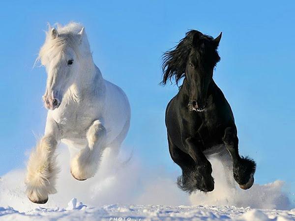 Bienvenidos al nuevo foro de apoyo a Noe #250 / 28.04.15 ~ 30.04.15 - Página 3 Paisajes+con+caballos