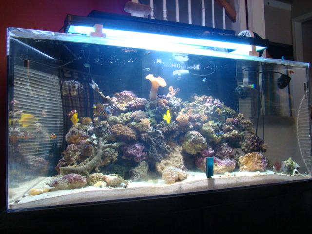 Saltwater Aquarium Kansas City Sea Life Aquarium In